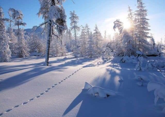 Зимняя тайга и тишина