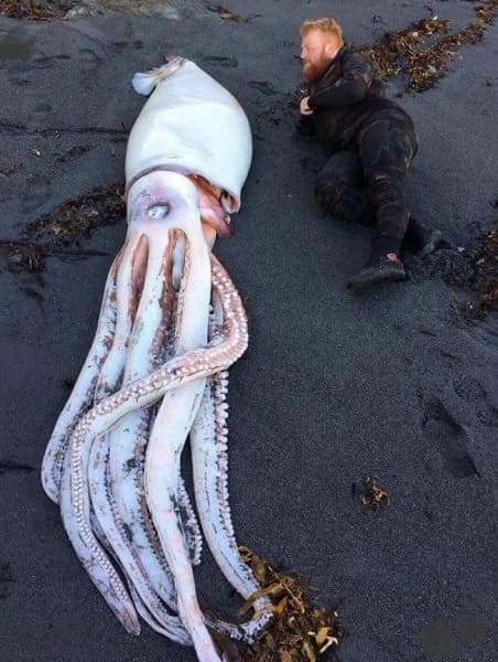 Необычный кальмар