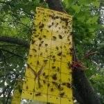 Виды ловушек для насекомых